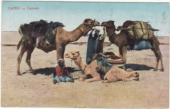 [14745]  EGYPT- GB.. WW1 CONVALESCENT CAMP, MUSTAPHA..  1919 (Mar 28)