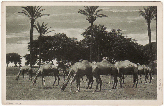 [18580]  EGYPT - GB…WW1 AUSTRALIAN FORCES ...   1916 (May 26)